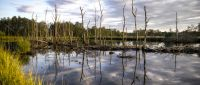 A Citizens' Guide to Wetland Conservation in the Halifax Regional Municipality