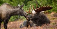 Protected on Paper Only: Evaluation of Nova Scotia's legal obligations to protect and recover mainland moose and other species at risk (2015)
